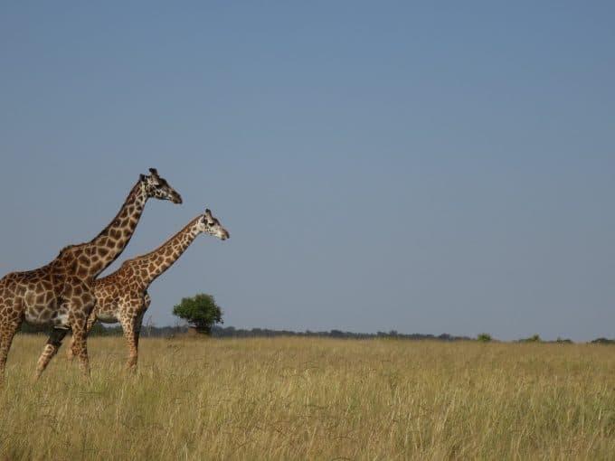 volontariato kenya masai ambiente