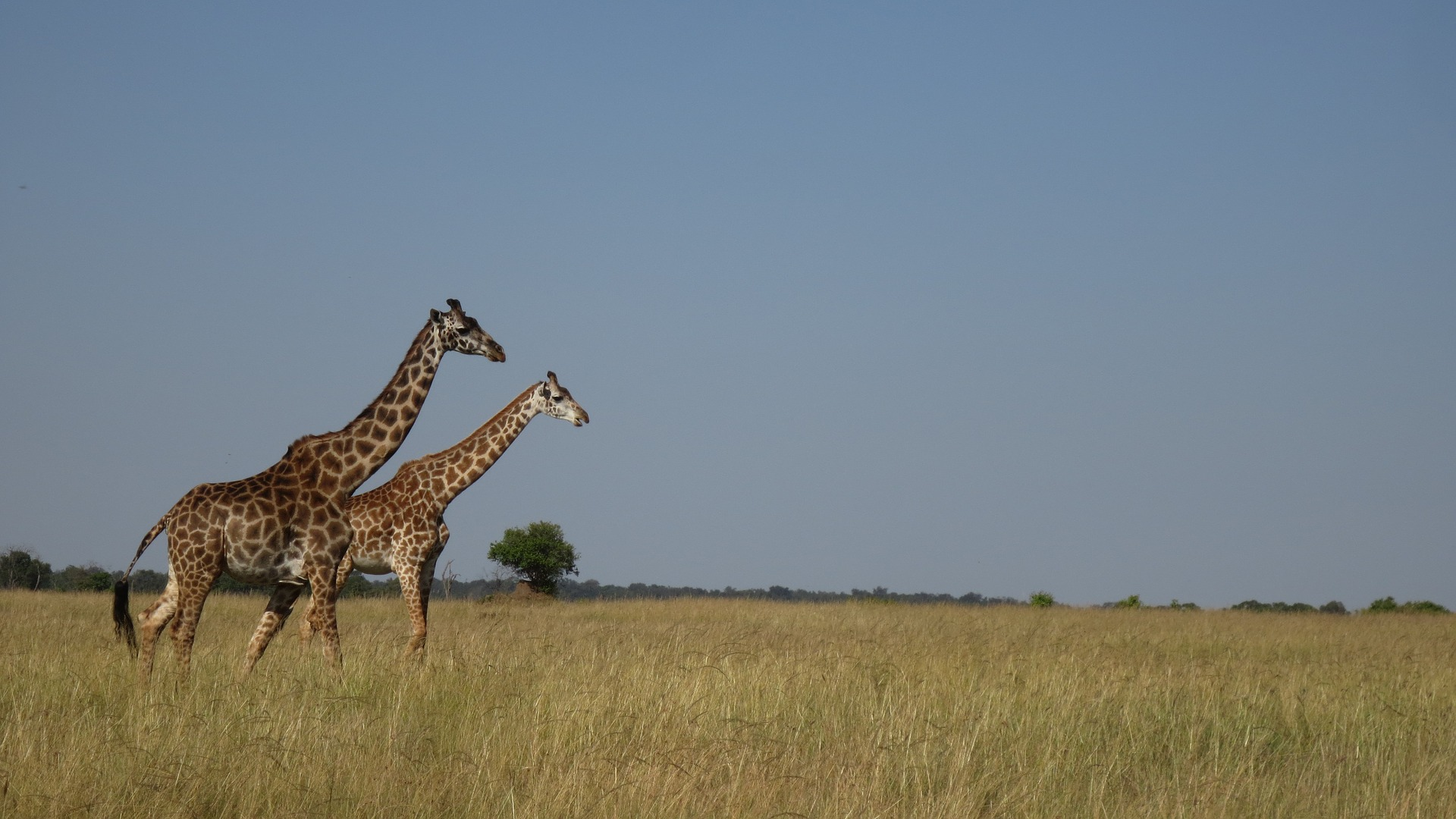 Volontariato Internazionale in Kenya per la tutela dell'ambiente