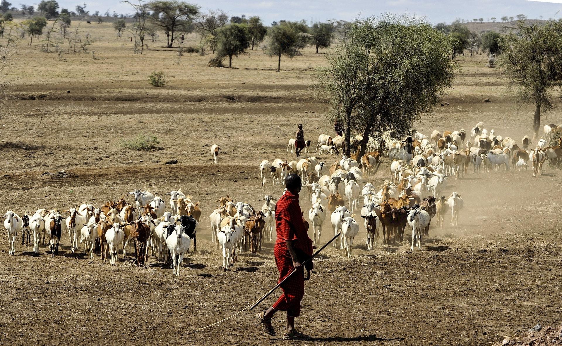 Volontariato internazionale in Tanzania nella tutela ambientale