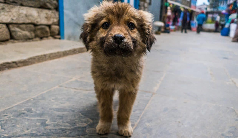 volontariato india animali