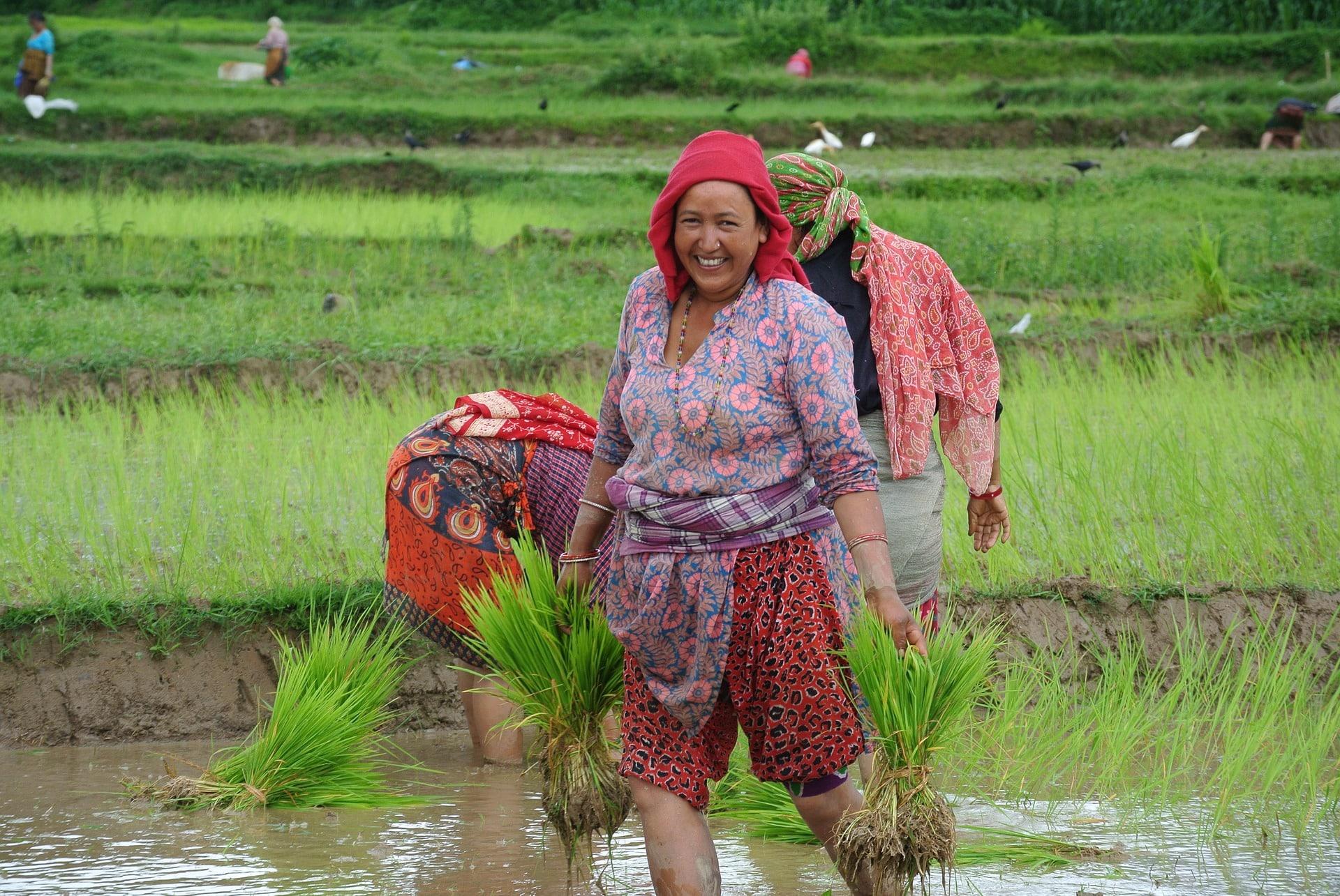 Volontariato internazionale in Nepal nell'agricoltura