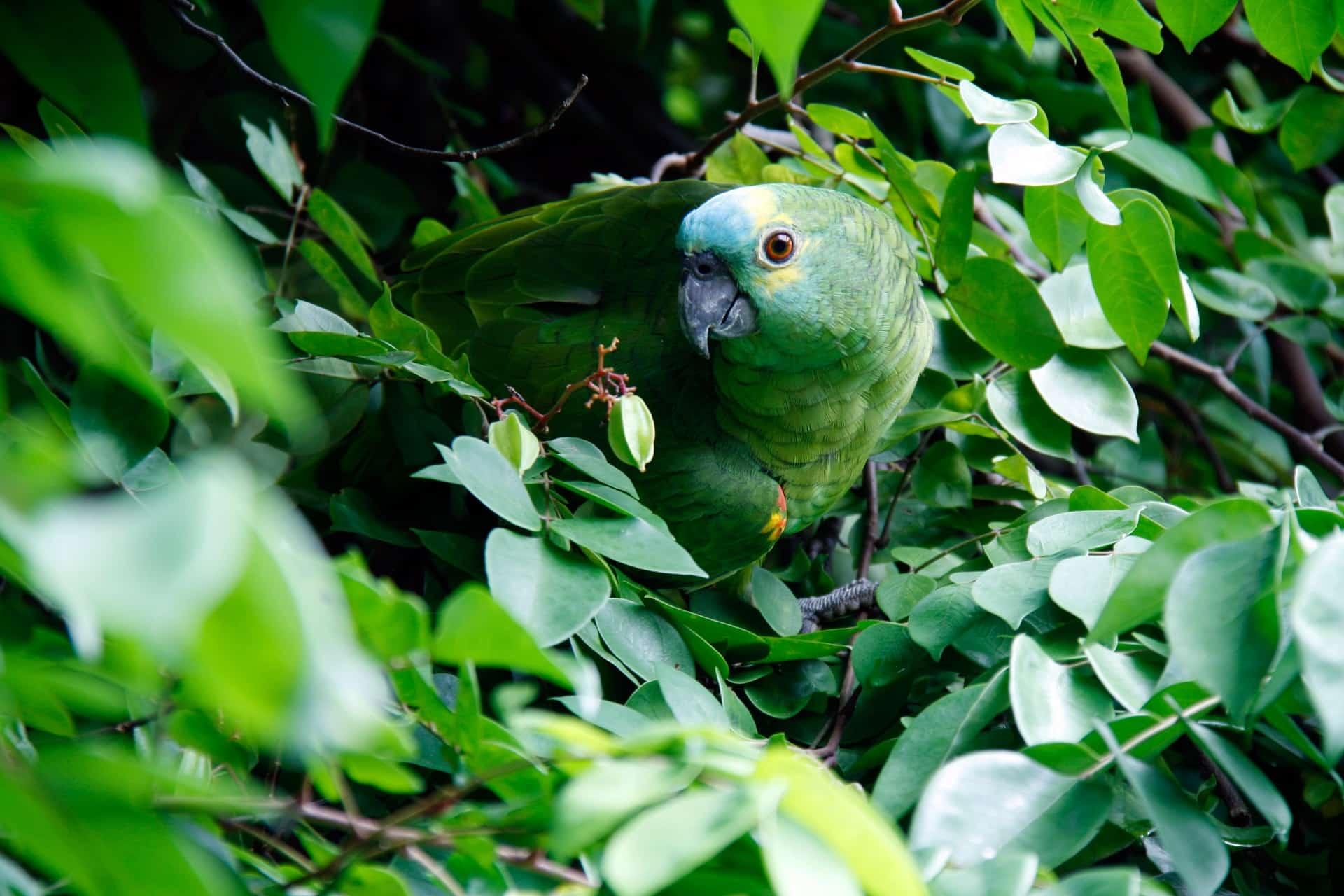 Volontariato internazionale in Brasile sull'educazione ambientale e la biodiversità