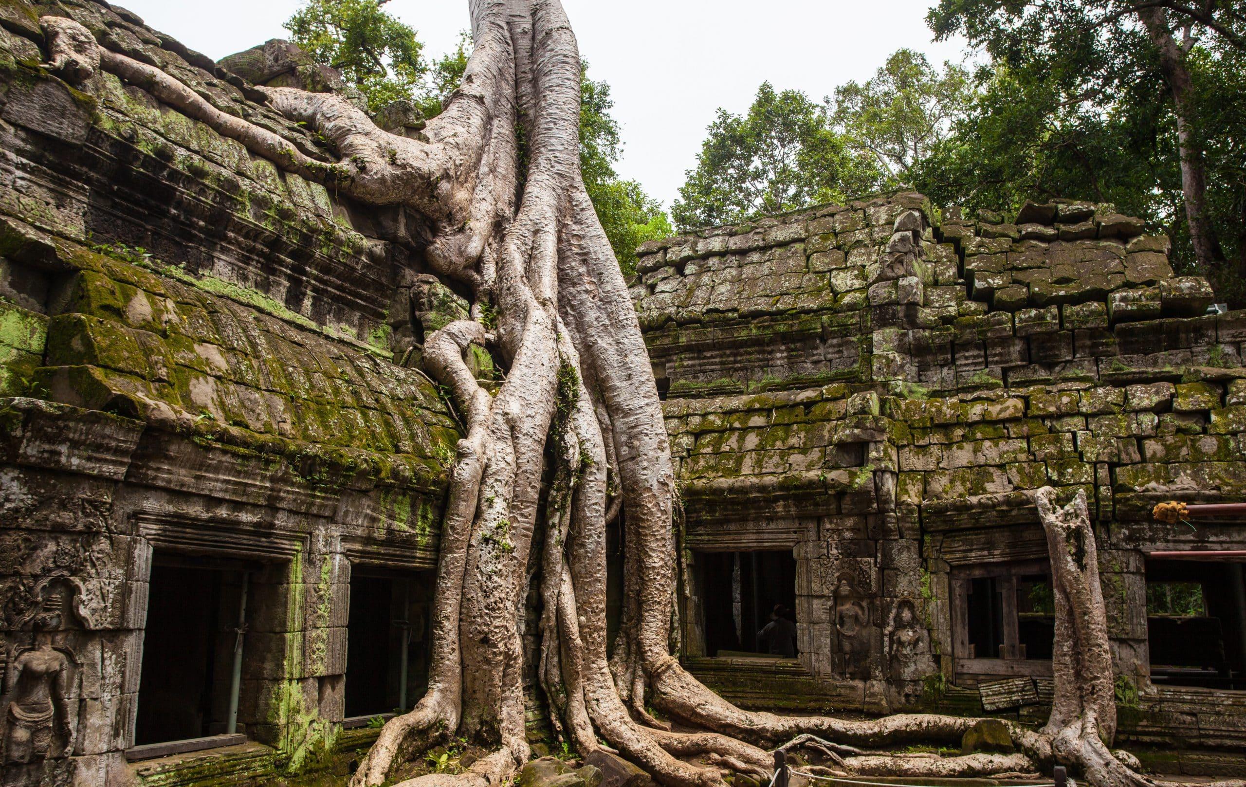 Volontariato per universitari in Cambogia per l'educazione ambientale