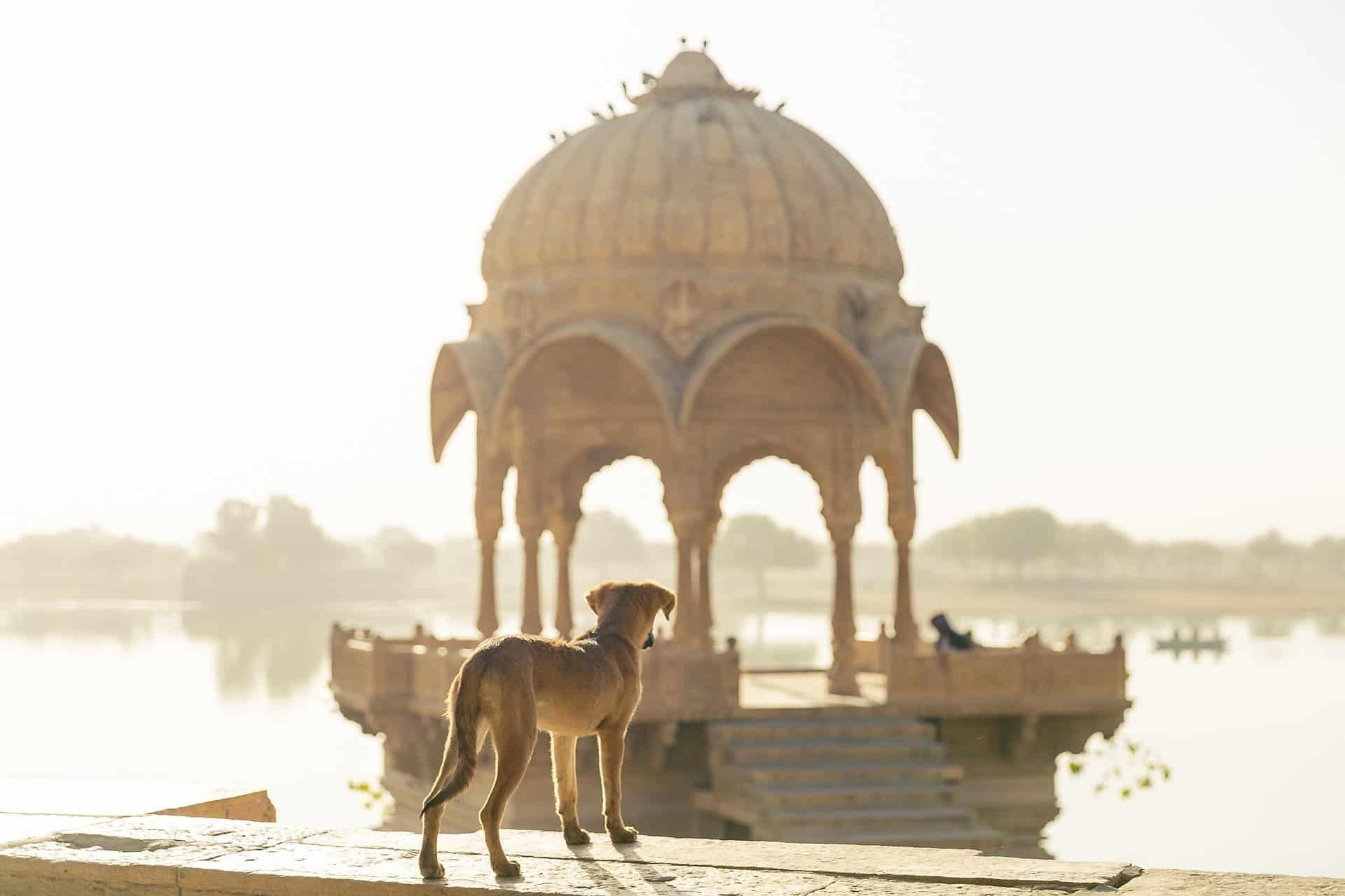 Volontariato internazionale in India con gli animali di strada