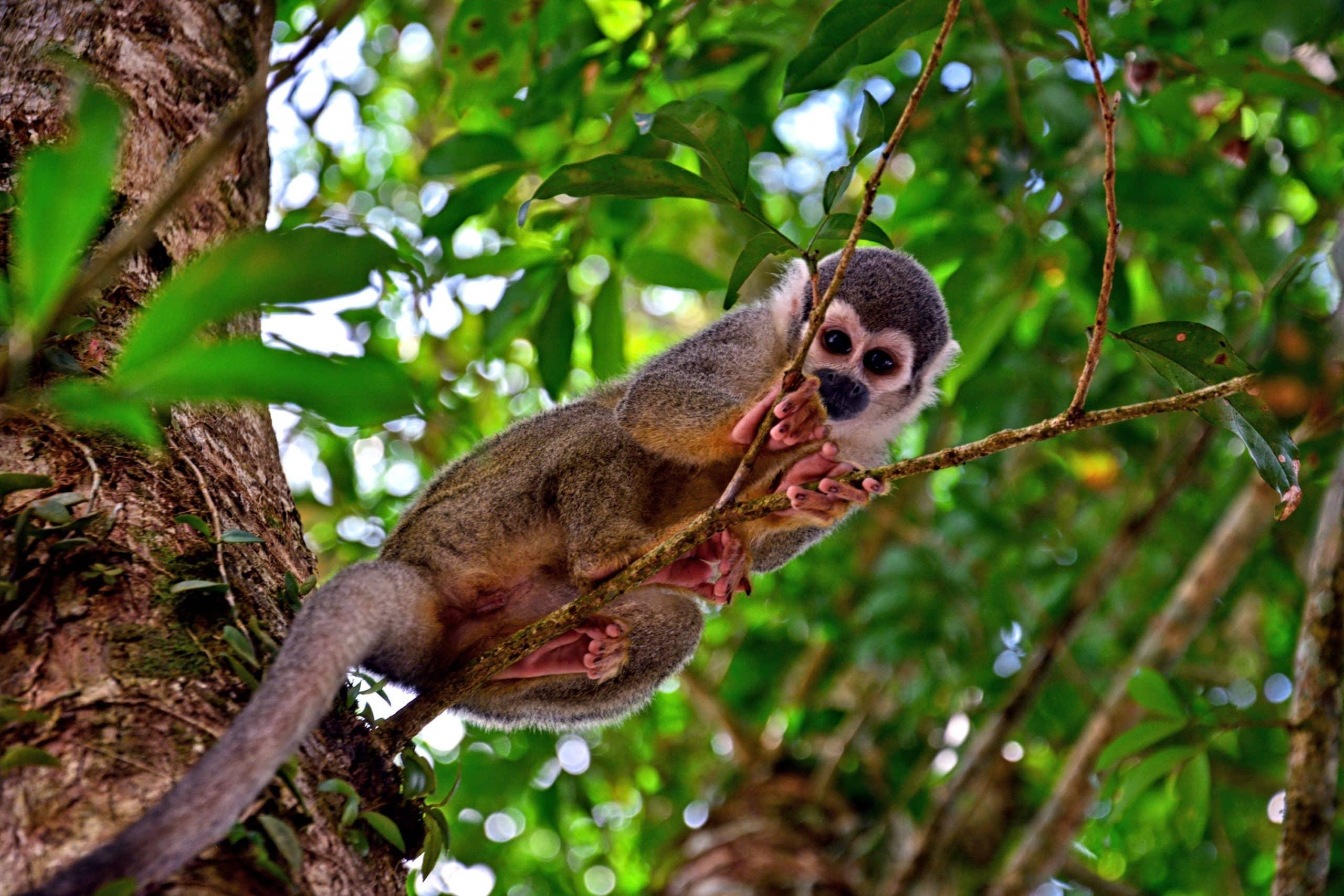Volontariato internazionale in Ecuador per la tutela degli animali