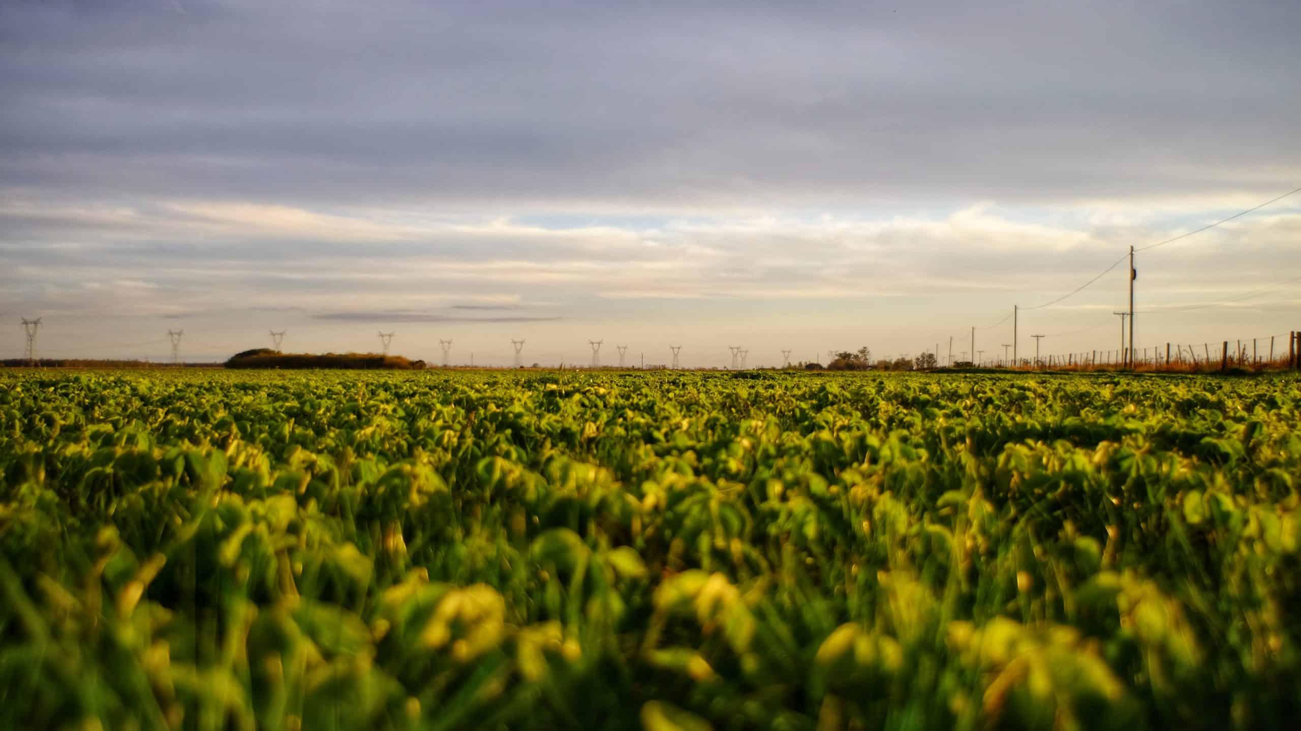 Volontariato in Argentina sull'agricoltura e lo sviluppo sociale