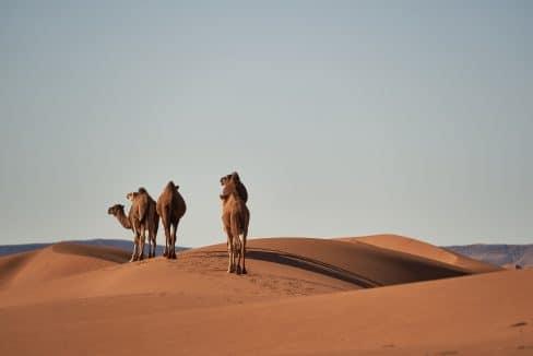 Campo di lavoro in Marocco per il Capodanno